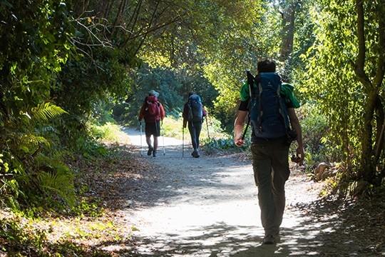 Padrón promocionará o Camiño de Santiago da Pedronía a través dunha aplicación web
