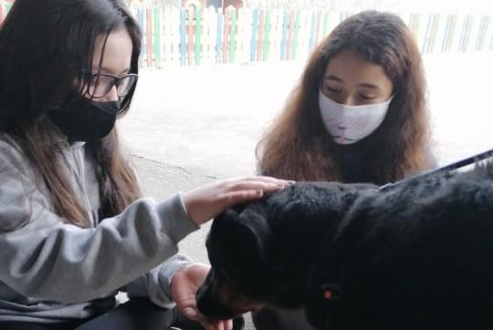 O Concello de Padrón reclama que a cidadanía se conciencie sobre a adopción de mascotas